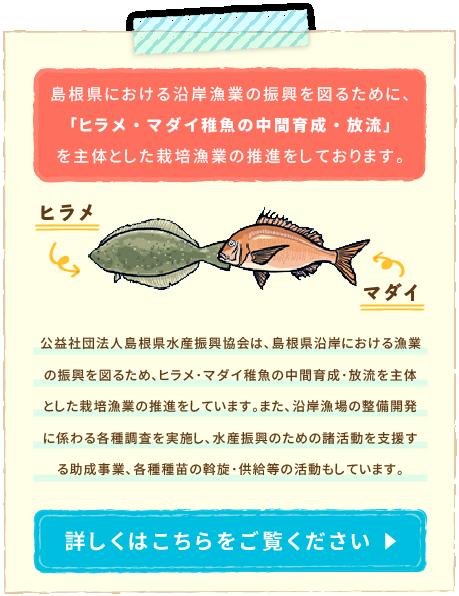 ヒラメ・マダイ稚魚の中間育成・放流